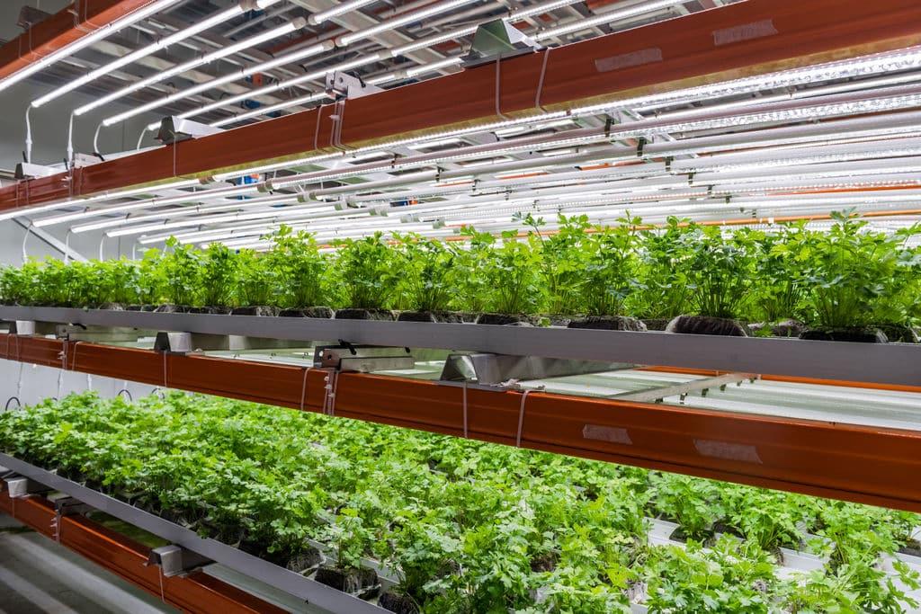 Luminus Verschilmakers Urban Harvest