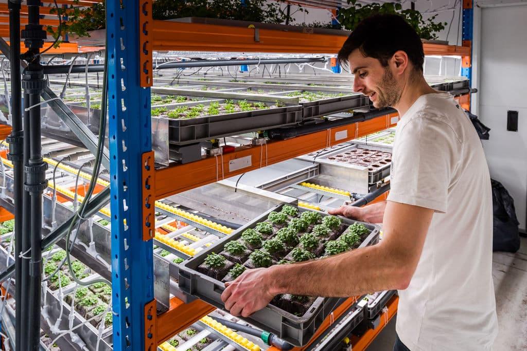 Urban Harvest Luminus Verschilmakers