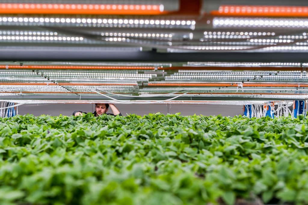Verschilmakers Urban Harvest
